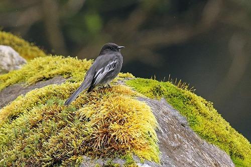 エクアドル アンデス東部の鳥